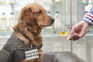 The world's first whisky sniffer dog, The Scotch Malt Whisky Sociey  - photo by Greg Macvean 6 email copy
